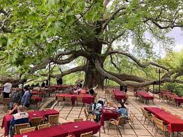 الشجرة العظيمة