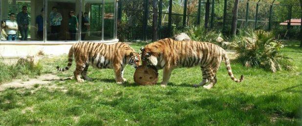 حديقة الحيوانات في بورصه