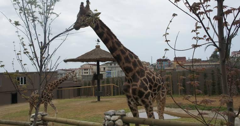 حديقة الحيوانات في انقرة